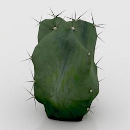 Cactus Lemairiocereus Pruinosus 3d model