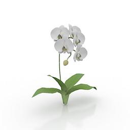 Flower Kotyou 3d model