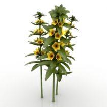 Flower Lysimachia punctata Alexander 3d model