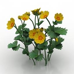 Flower Potentilla fragiformis 3d model