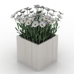 Flowers camomile 3d model