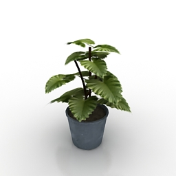 Plant Downloadfree3d Com