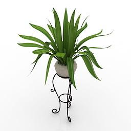 3D Indoor Plants Models Free Download   DownloadFree3D com
