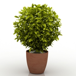 3D Indoor Plants Models Free Download | DownloadFree3D com