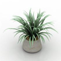 Plant Chlorophytum vase 3d model