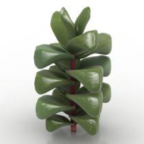 Plant Crassula Cornuta 3d model
