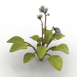 Plant Hosta 3d model