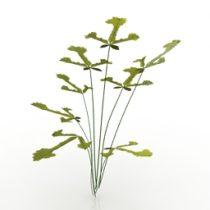 Plant Pteris Fern 3d model