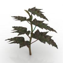 Plant Sawtooth Begonia 3d model