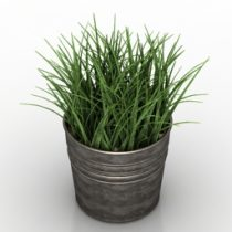 Plant grass Wheat 3d model