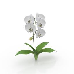 Flower 3d model download