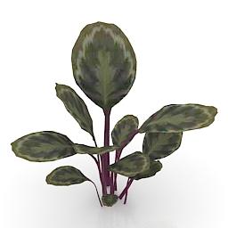 Flower Calathea 3d model