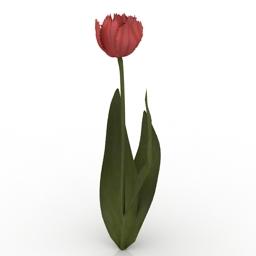 Flower Flaming Parrot Tulip 3d model