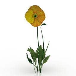 Flower Iceland Poppy 3d model