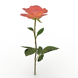 Flower Peach Rose 3d model
