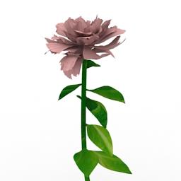 Flower Peony 3d model