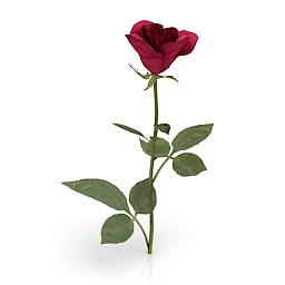 Flower Red Rose 3d model