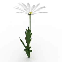 Flower Shasta Daisy 3d model
