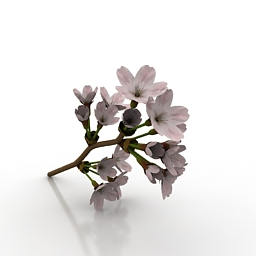 Flower Someiy 3d model