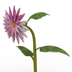 Flower Velvet Queen Helianthus 3d model