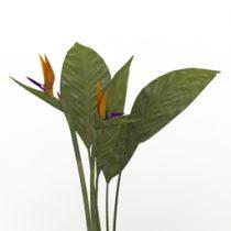 Plant Bird of Paradise 3d model