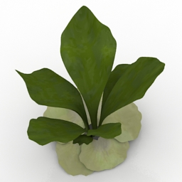 Plant Staghorn Fern 3d model