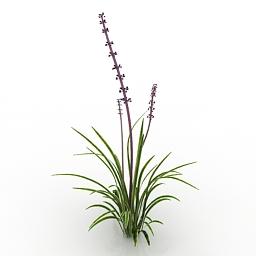 Plant Variegated Liriope 3d model