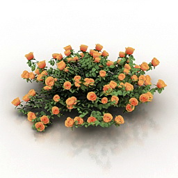 Roses 3d model