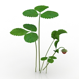 Other Plants 3D Models Free Download | DownloadFree3D com