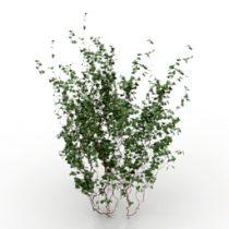 Bush 3d model download