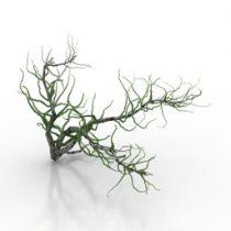 Bush Haloxylon 3d model