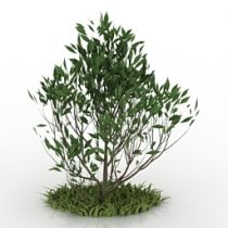 Bush and grass 3d model download