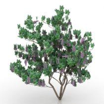 Bush lilac 3d model