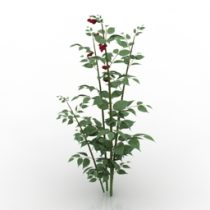Bush raspberry cane 3d model