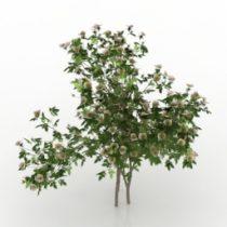 Bush rose Sanina 3d model