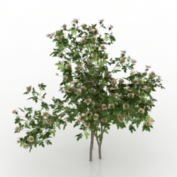 Bush rose Sanina 3d model