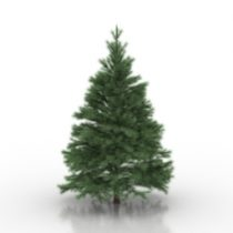Conifers tree 3d model