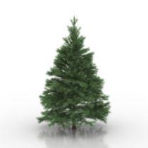 Conifers tree 3d model