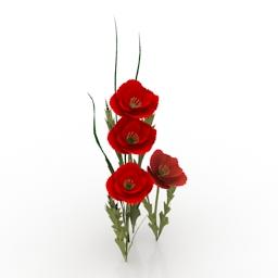 Flower California Poppies 3d model