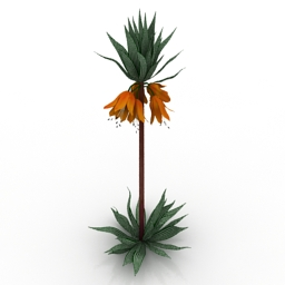 Flower Crown Imperial Fritillaria 3d model