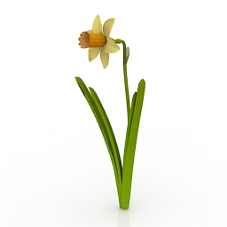 Flower Daffodil 3d model