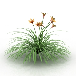 Flower Hemerocallis 3d model
