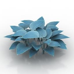 Flower Hosta x hybrid Blue Cadet 3d model