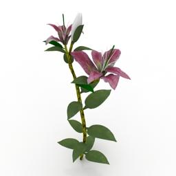 Flower Star Gazer Lily 3d model