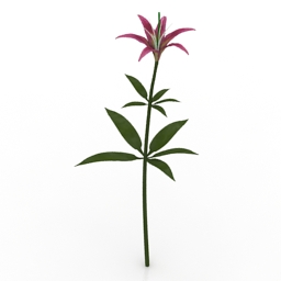 Flower Wood Lily 3d model