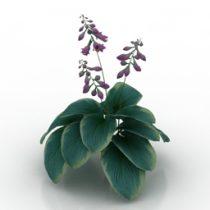 Flower hosta 3d model