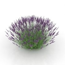 Flower lavender 3d model