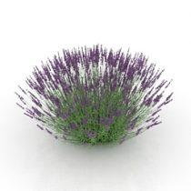 Flower lavender 3d model