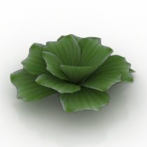 Flower pistia 3d model