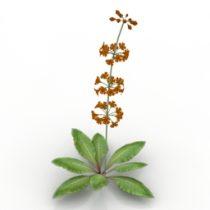 Flower primula 3d model